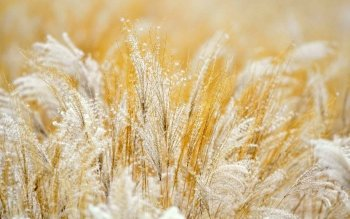 Earth - Grass Wallpapers and Backgrounds ID : 417437