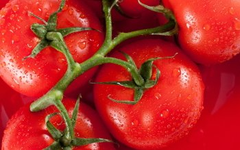 Alimento - Tomato Wallpapers and Backgrounds