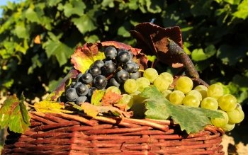 Alimento - Grapes Wallpapers and Backgrounds ID : 417970