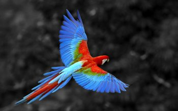 Animal - Macaw Wallpapers and Backgrounds ID : 418247