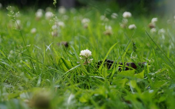 Earth Flower Flowers Grass Garden Plant Weed HD Wallpaper | Background Image