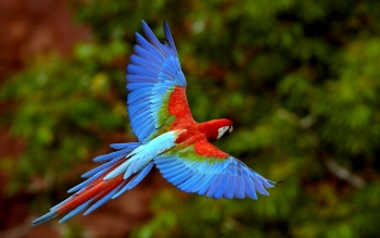 Animal - Macaw Wallpapers and Backgrounds ID : 419110