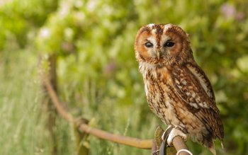 Animal - Owl Wallpapers and Backgrounds ID : 419729