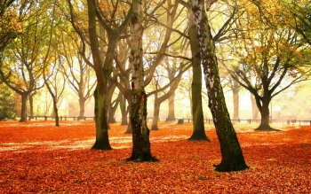 Earth - Autumn Wallpapers and Backgrounds ID : 421863