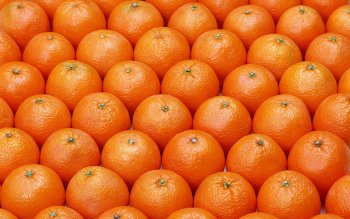 Food - Orange Wallpapers and Backgrounds ID : 422484
