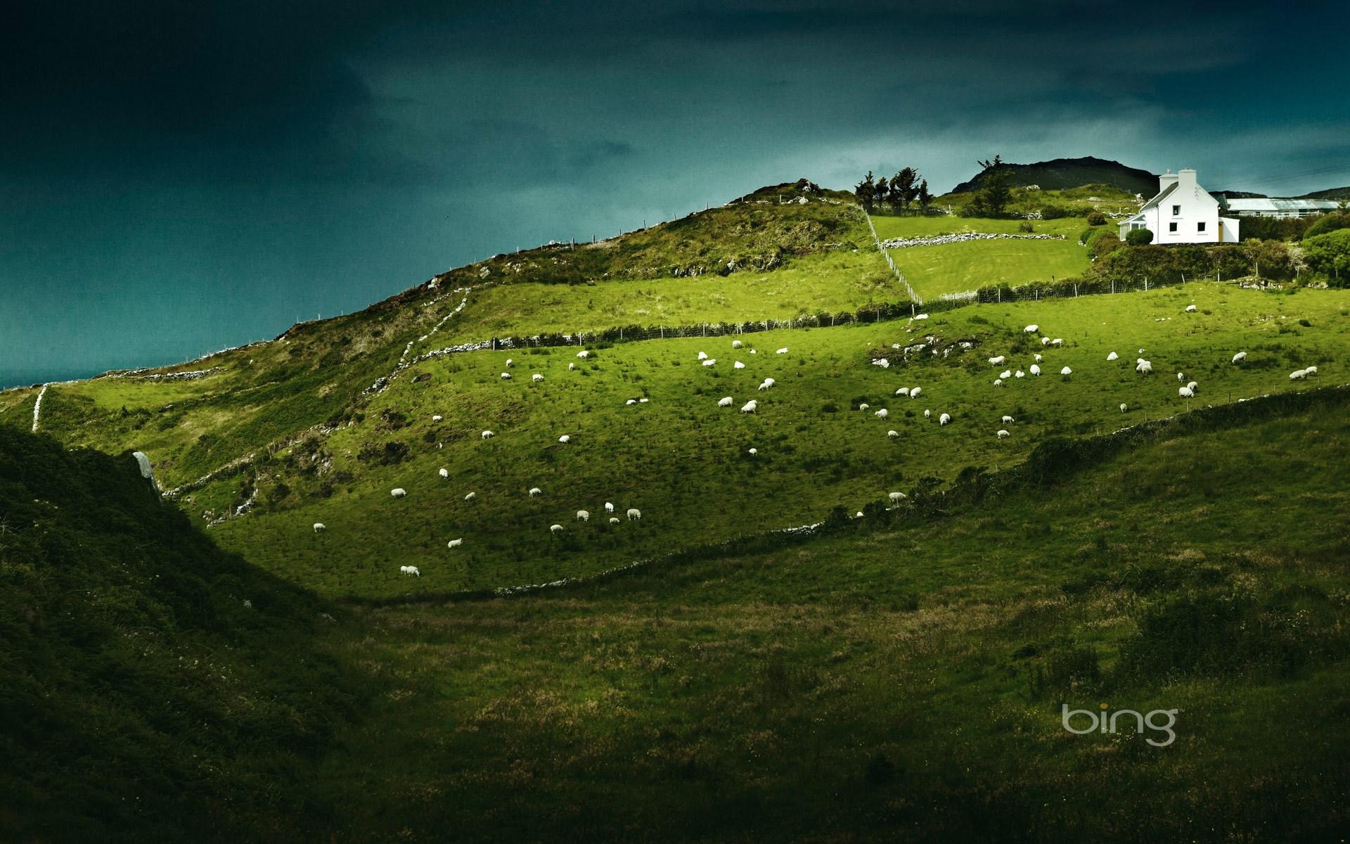 Sheeps Head Ireland Computer Wallpapers Desktop