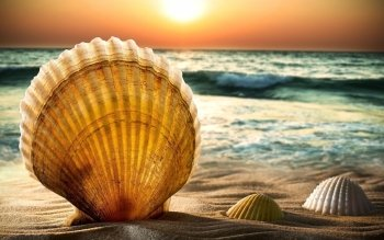 Earth - Shell Wallpapers and Backgrounds ID : 423385