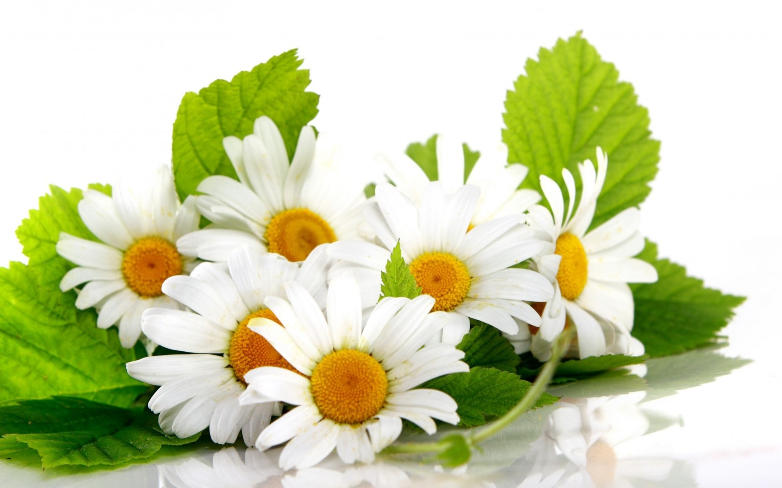 402 Daisy Hd Wallpapers Background Images Wallpaper Abyss
