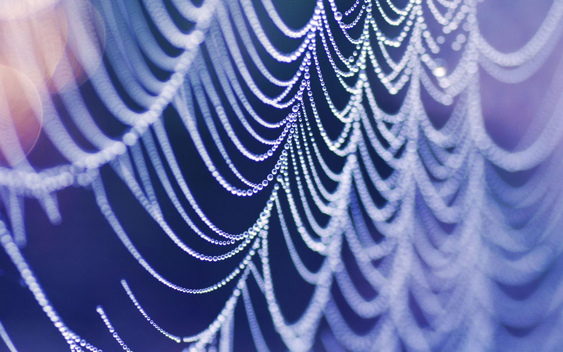 Обои web, wet, Spider, drops. Макро foto 15