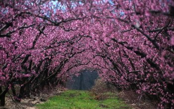 Earth - Blossom Wallpapers and Backgrounds ID : 424939