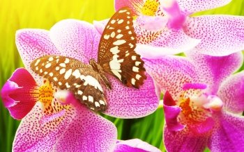 Animal - Butterfly Wallpapers and Backgrounds ID : 425062