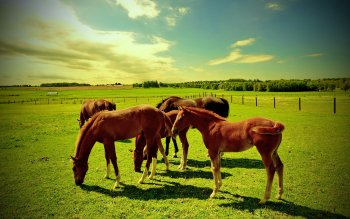 Animalia - Caballo Wallpapers and Backgrounds ID : 425273