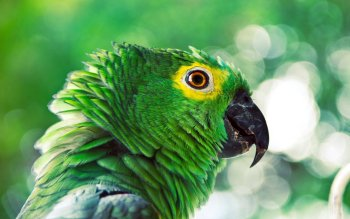 Animal - Parrot Wallpapers and Backgrounds ID : 425786
