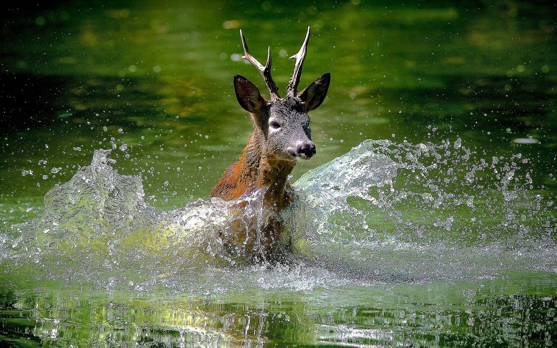 Deer HD Wallpaper | Background Image | 1920x1200 | ID ...