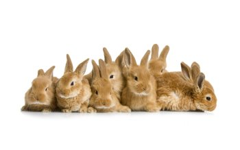 Animal - Rabbit Wallpapers and Backgrounds ID : 427010