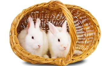 Animal - Rabbit Wallpapers and Backgrounds ID : 427012