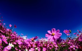 Earth - Flower Wallpapers and Backgrounds ID : 427616