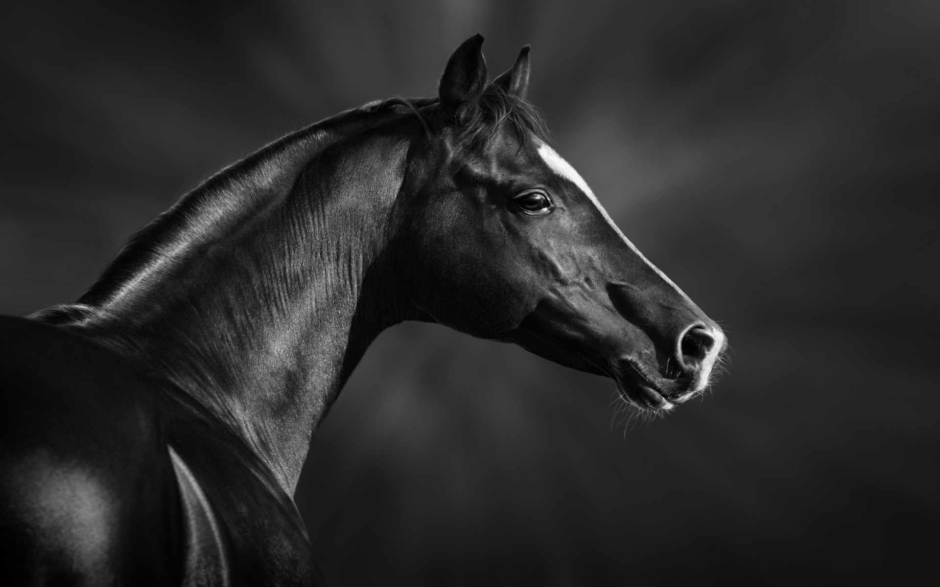 Horse Full HD Wallpaper And Background Image