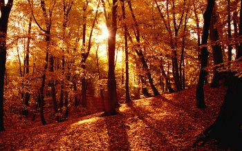 Earth - Autumn Wallpapers and Backgrounds ID : 428165