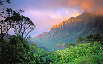 Earth - Jungle Wallpapers and Backgrounds ID : 429111