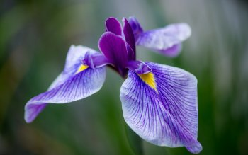 Earth - Iris Wallpapers and Backgrounds ID : 430506