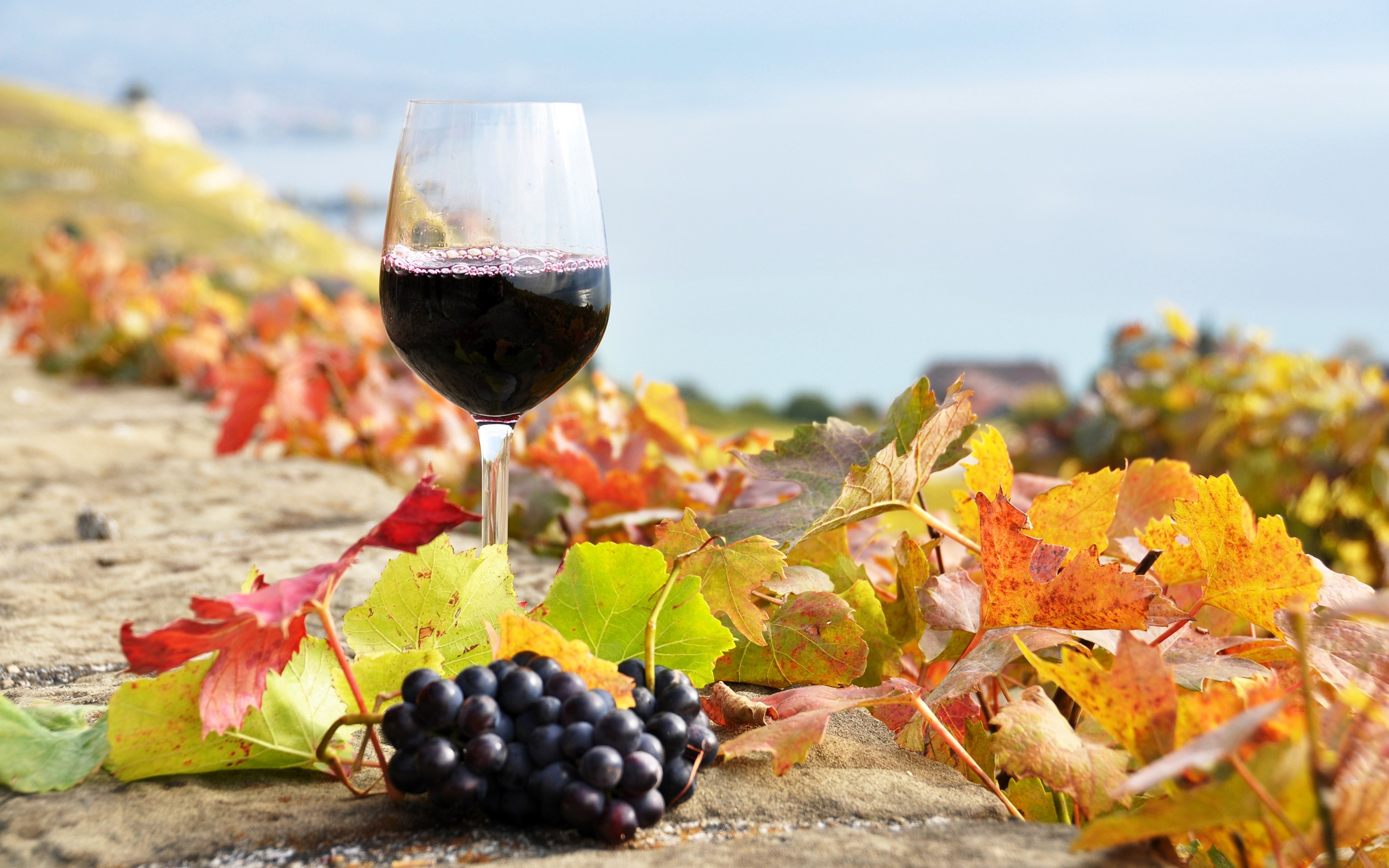 Wine Full HD Wallpaper and Background | 2880x1800 | ID:431794