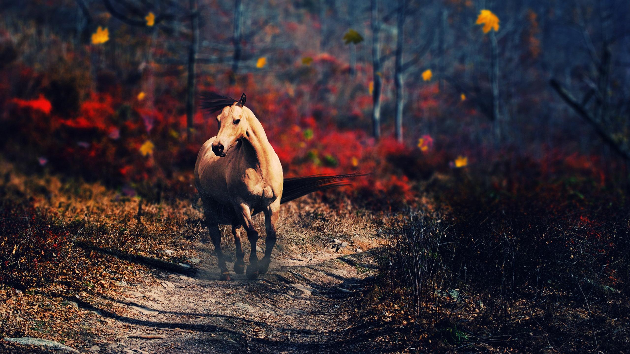 Horse Computer Wallpapers, Desktop Backgrounds | 2560x1440 ...