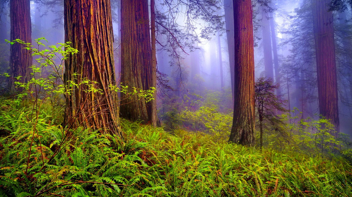 Misty Forest Wallpaper And Background Image 1366x768