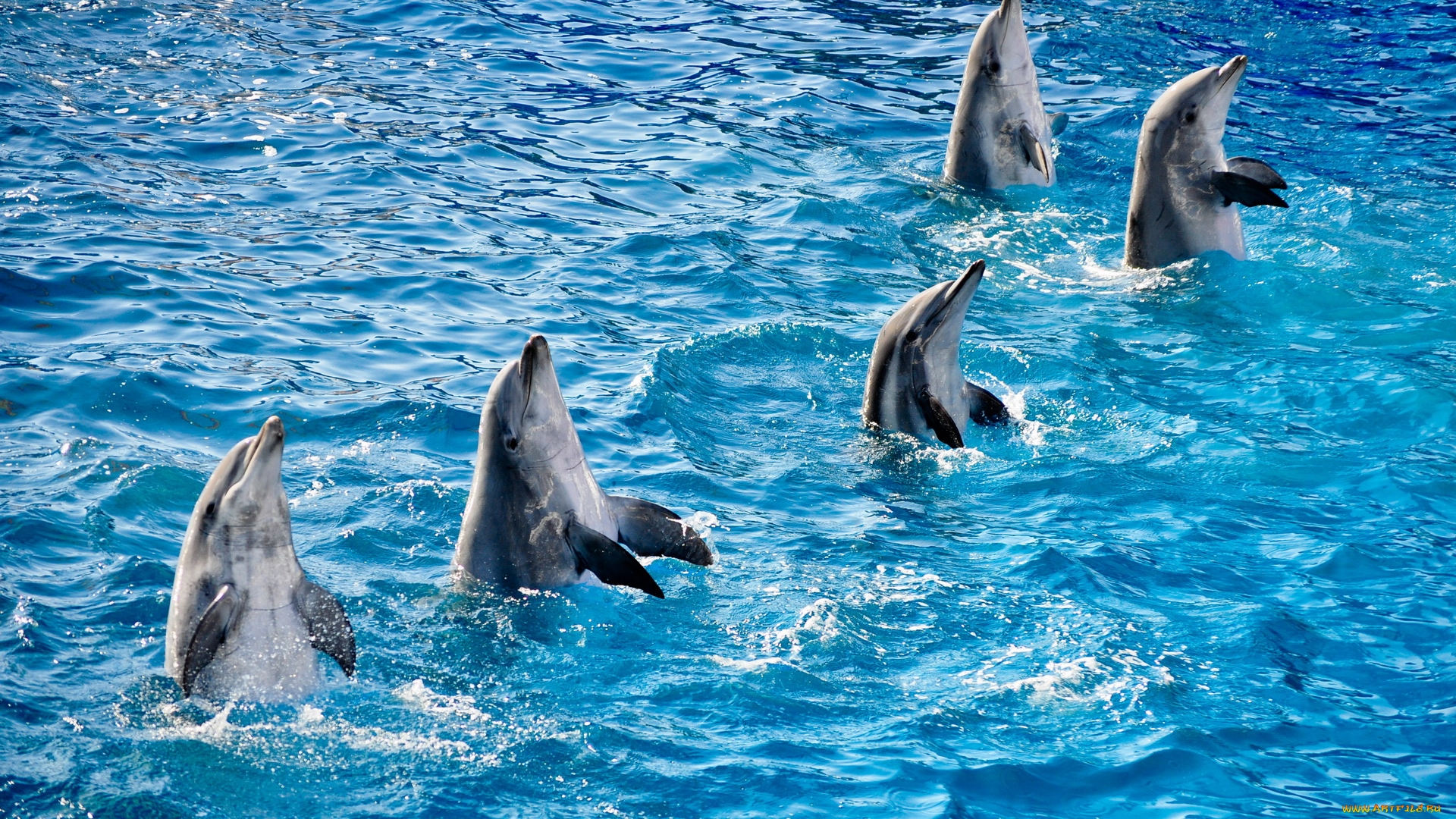 Dolphin Full Hd Wallpaper And Background Image 1920x1080