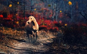 Animal - Horse Wallpapers and Backgrounds ID : 432346