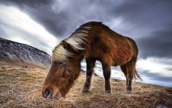 Animalia - Caballo Wallpapers and Backgrounds ID : 432594