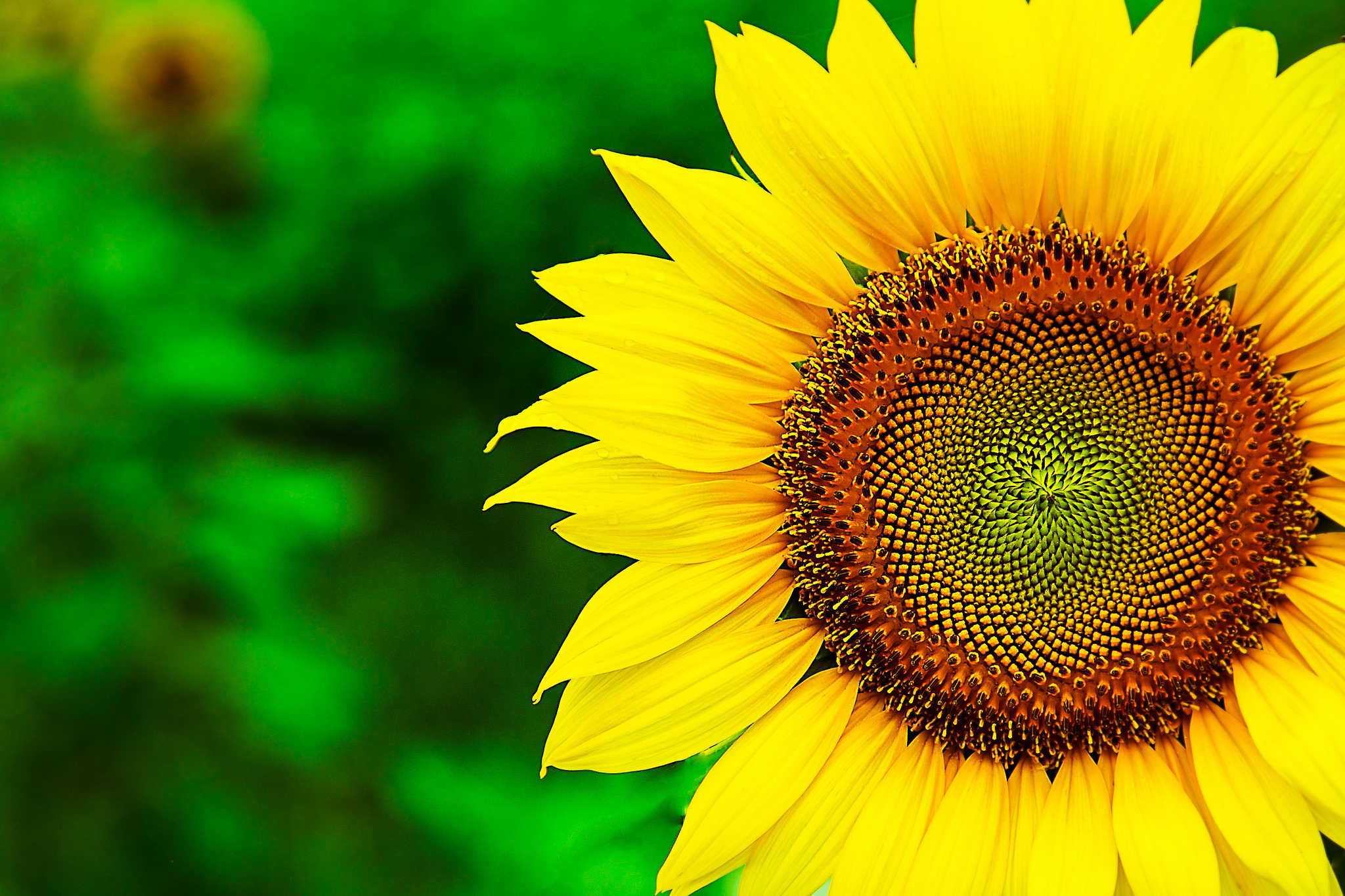 HD Wallpaper | Background Image ID:433469. 2048x1365 Earth Sunflower