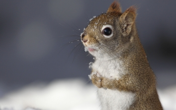 Animal - Squirrel Wallpapers and Backgrounds ID : 433053