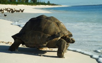 Animalia - Tortuga Wallpapers and Backgrounds ID : 433182