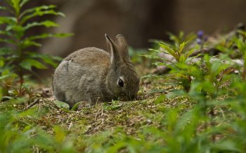 Animal - Hare Wallpapers and Backgrounds ID : 433435