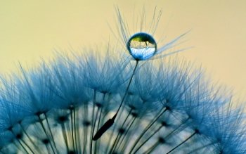 Earth - Dandelion Wallpapers and Backgrounds ID : 433538