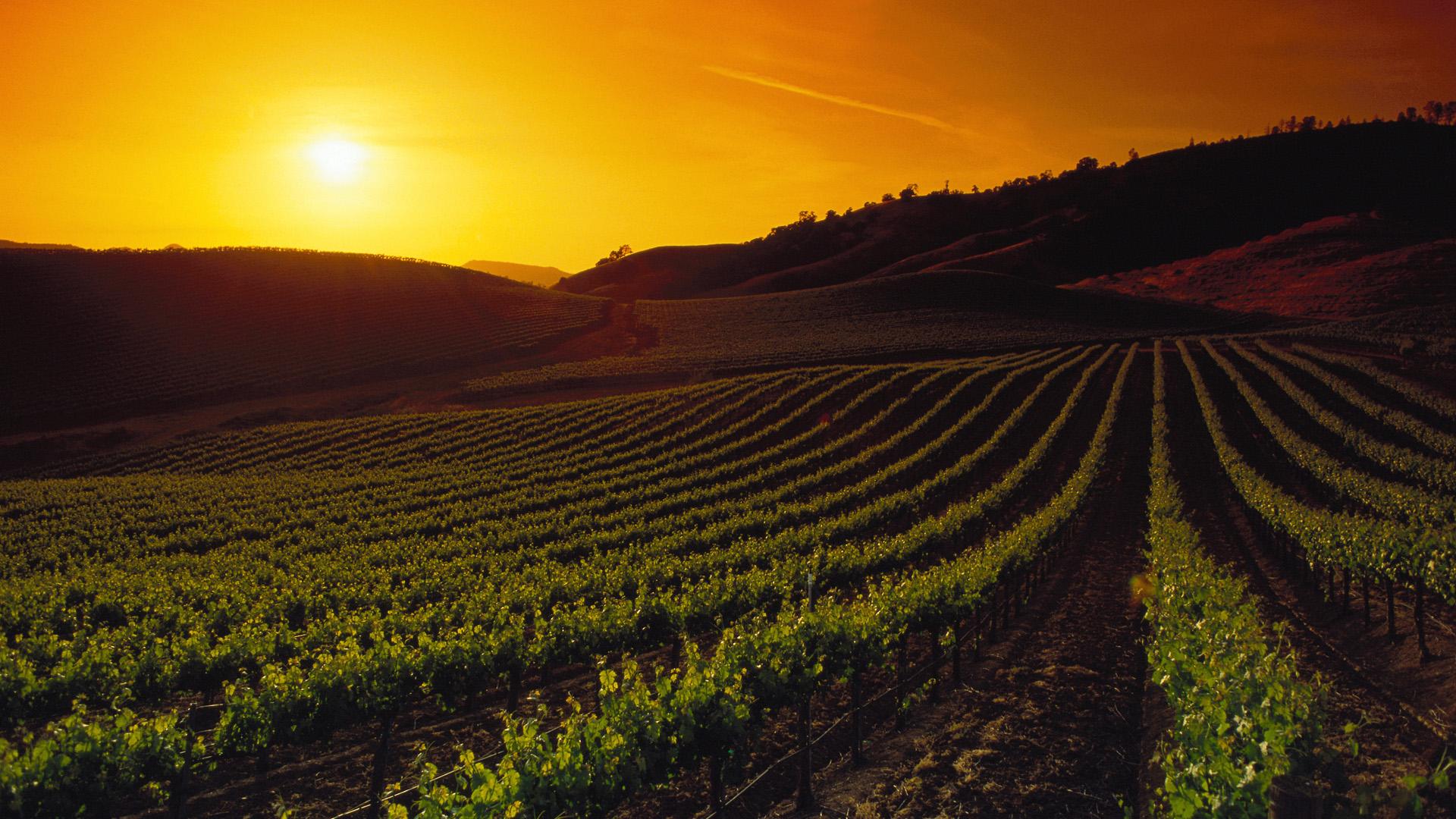Vineyards at Sunset, Napa Valley, California Full HD ...