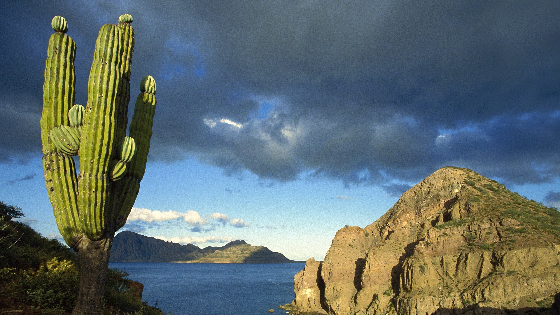 danzante island  sea of cortez  baja california  mexico