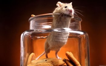 Animal - Mouse Wallpapers and Backgrounds ID : 437149