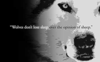 Diversen - Quote Wallpapers and Backgrounds ID : 437221