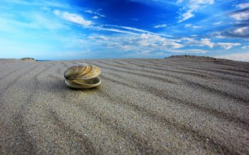Earth - Shell Wallpapers and Backgrounds ID : 437269
