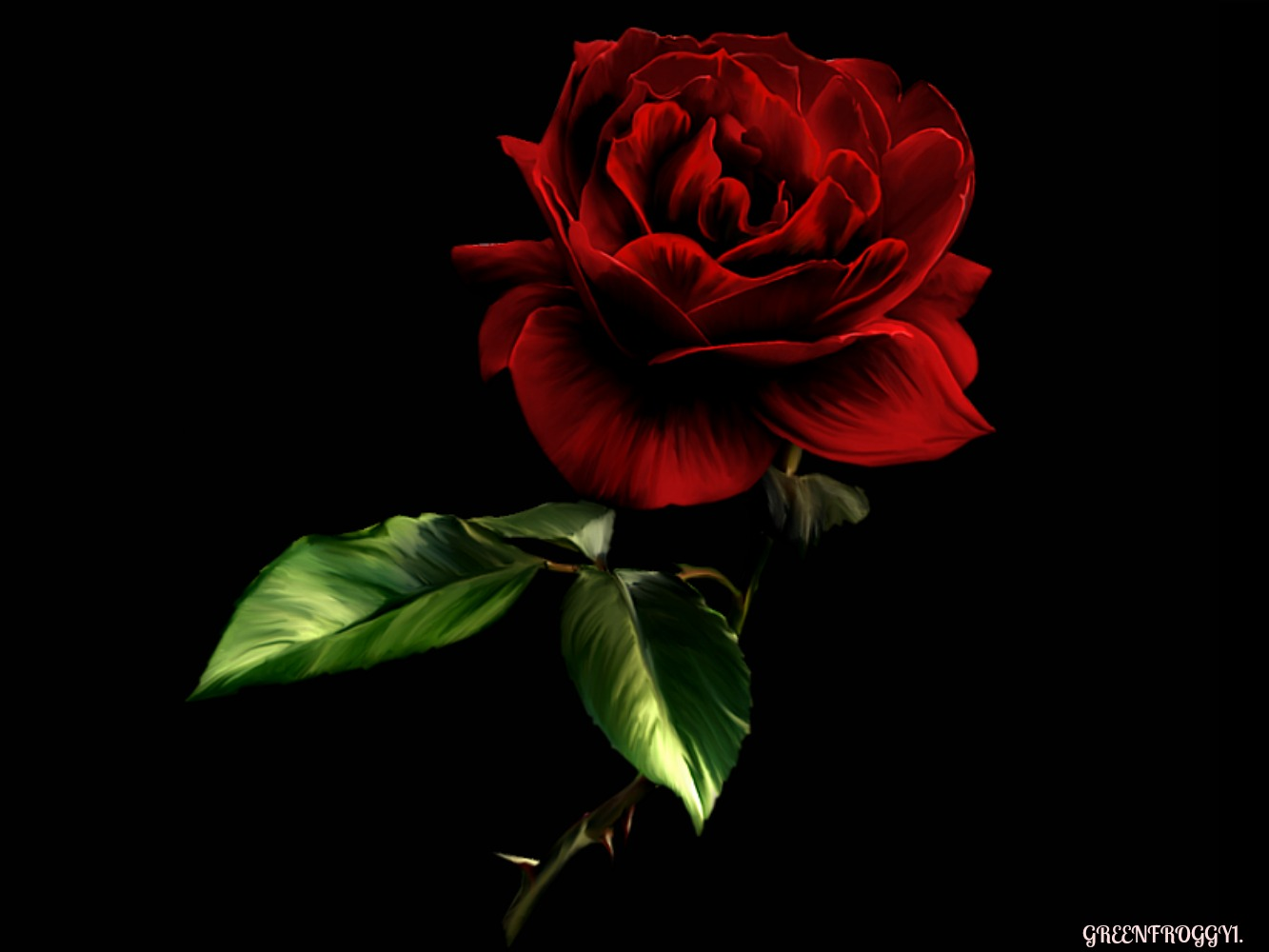 RED ROSE ON BLACK Wallpaper And Background Image