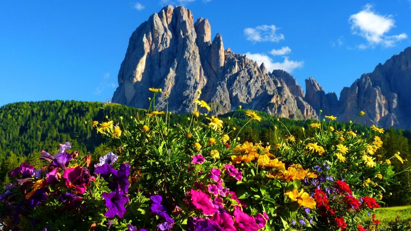 Flower · Mountain · Wallpapers ID:439289