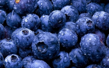 Alimento - Blueberry Wallpapers and Backgrounds ID : 439270