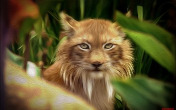 Animal - Lynx Wallpapers and Backgrounds ID : 441814