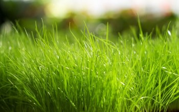 Earth - Grass Wallpapers and Backgrounds ID : 443836