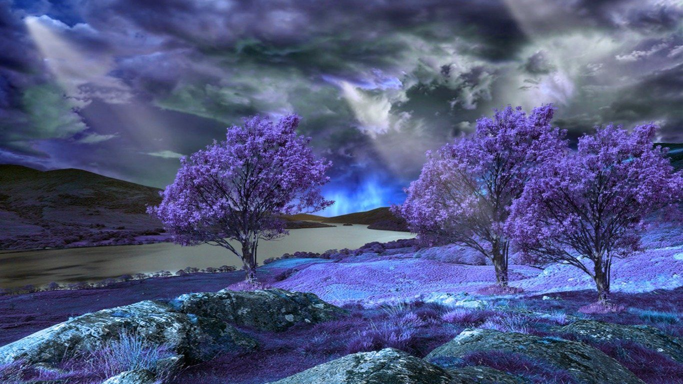 Lavender Trees Wallpaper And Background Image