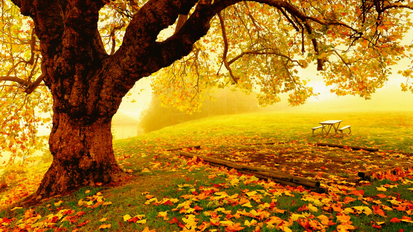 Pretty autumn day wallpaper and background 1366x768 id for Desktop autunno