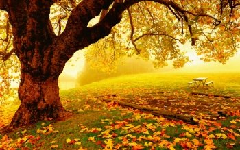 Photography - Autumn Wallpapers and Backgrounds ID : 447335