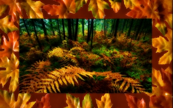 Earth - Autumn Wallpapers and Backgrounds ID : 449016